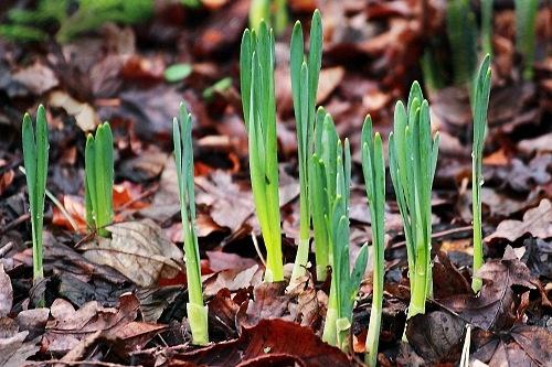 spring_1236357528_crop_500x333
