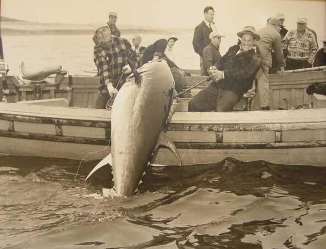Wegeport-Heyday-Tuna-Fishing