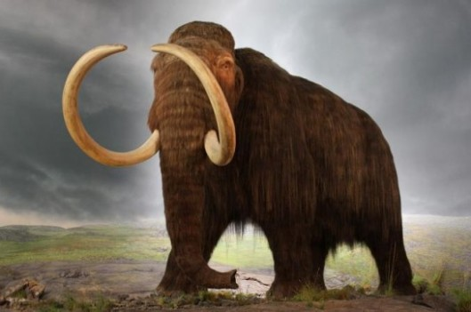 Wooly-Mammoth-545x362