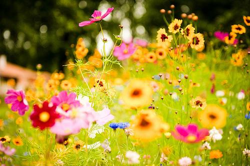 spring-flowers