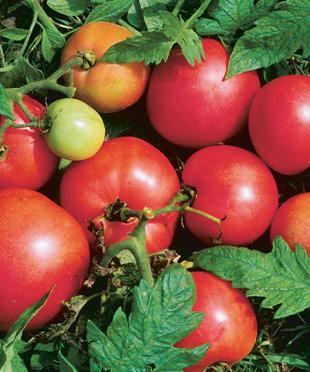 042014_heirloom_tomatoes_ld