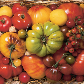 heirloom-tomato-myth_1