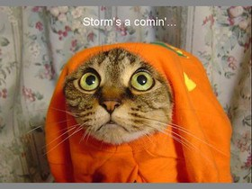 funny-animals-storm-s-a-comin