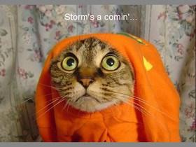 funny-animals-storm-s-a-comin