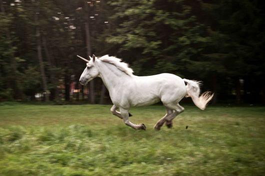 unicorn-real