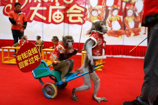 china-year-monkey-1
