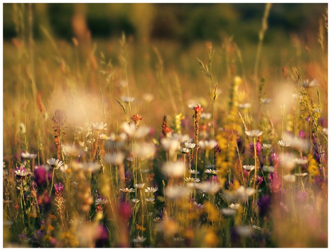 flower_field_by_iustyn-d1taim9